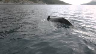 Valas veneen alla (Whale under the boat)