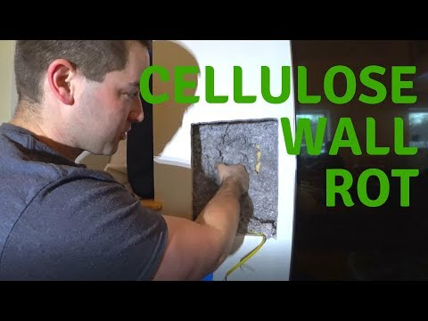 Wall Rot In Double Stud Cellulose Insulated House