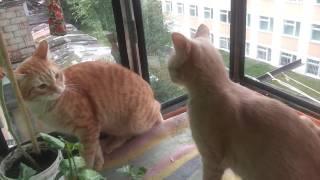 ✅КОШАЧИЙ БОКС,смотреть до конца! /CAT BOX/TOP FUNNY BEST CATS VIDEO/ЛУЧШИЕ ПРИКОЛЫ -СМЕШНЫЕ КОТЫ
