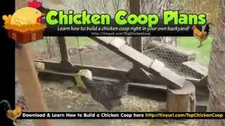 Build A Chicken Coop - Chicken Coop Pictures & Plans