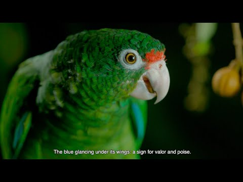 Sounds Like Puerto Rico Ep. 4: Birds in Paradise