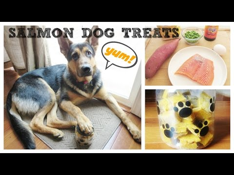 Download Salmon Dog Treats - Oven Baked Pictures