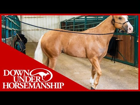 Clinton Anderson: Correcting a Horse That Paws While Tied Up - Downunder Horsemanship