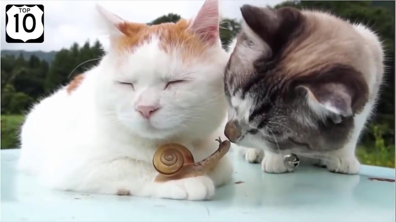 ЛУЧШИЕ ПРИКОЛЫ с Котами. Самые Смешные Видео про Кошек и Котов. Лучшее за 2019 | Заработок на Компьютере на Автомате