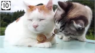 ЛУЧШИЕ ПРИКОЛЫ с котами. Самые смешные видео про кошек и котов.  Лучшее за 2017 год.