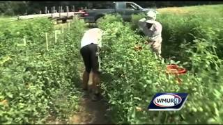 Hot weather stresses NH farms