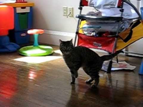 Raccoon Walks Away With Cat Food