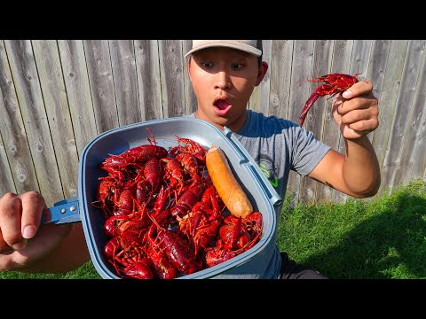 GIANT Crawfish CATCH CLEAN COOK! (Solo Crawfish Trapping)