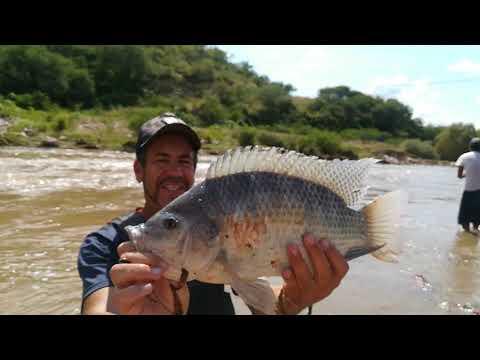 Pescando tilapia grande en el río pesca con chuy