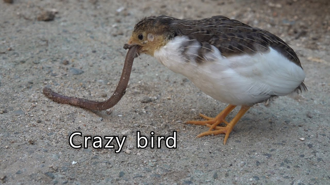 What is the name of this bird?