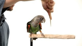 How to Target Train Your Parrot | Parrot Training