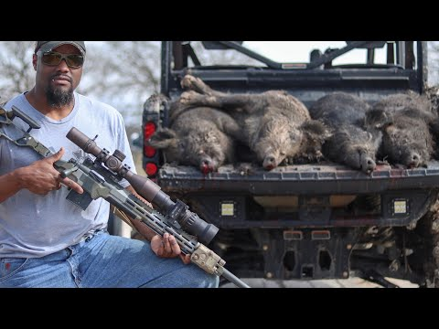 Hog Hunting With A Bolt Action And Night Vision