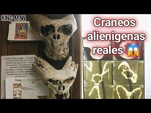 Craneos encontrados en cofre fueron analizados y son reales extraterrestres insectoides ?