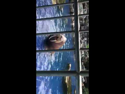 The Safari World in Bangkok 2017 - Marine Park in Bangkok