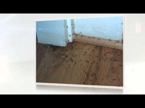 How Much Does A Termite Treatment Cost - YouTube