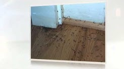 How Much Does A Termite Treatment Cost