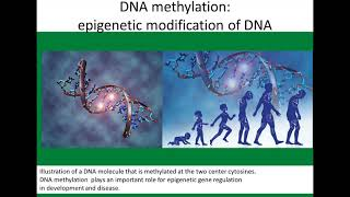 DNA Methylation: Timekeeper of Biological Age. Epigenetic clock