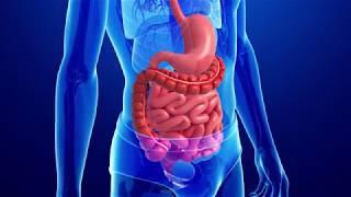 УЗИ желудка и кишечника. Что поможет выявить данное исследование?