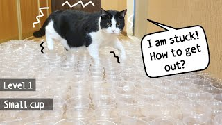 Crazy Cup Challenge!!! 3 levels (small-medium-large cups). Can the cat go through all this?