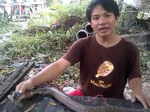 Nguyen nhu huu bat ran ho mang