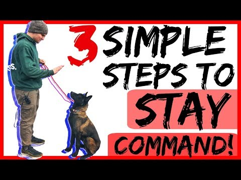 Teach Your Dog to Stay with Three Dog Training Steps - Dog Training with Americas Canine Educator