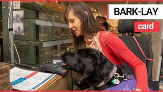 Download lagu Assistance dog helps a young disabled woman pay for her shopping SWNS TV MP3
