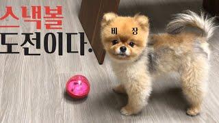 (ENG)공 좋아하는 강아지들에게 짱인 스낵볼 노즈워크…