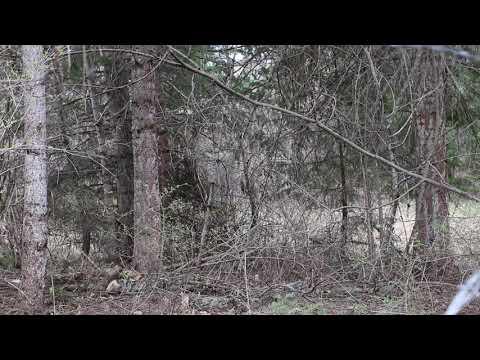 FireSmart Tip - Vegetation Management (30 sec)