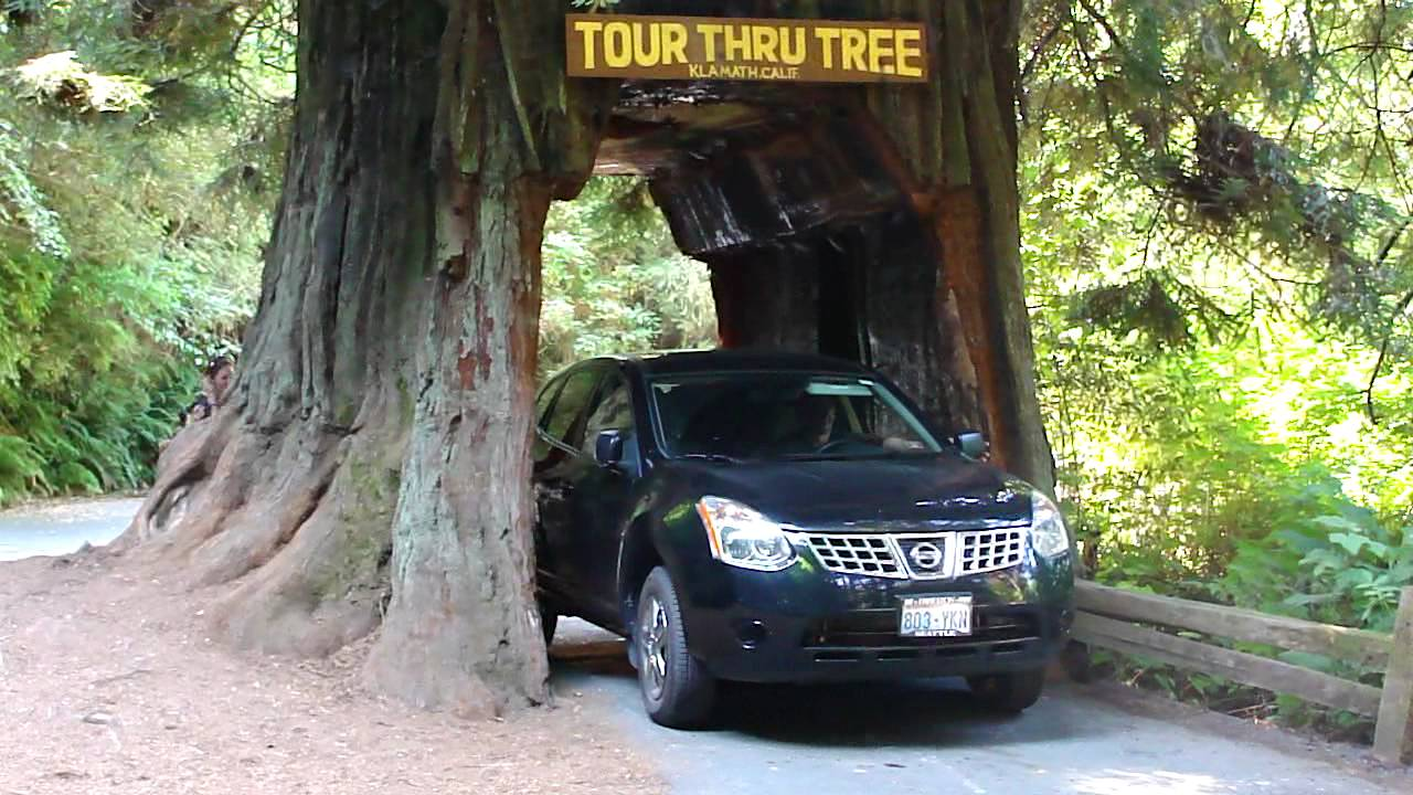 Drive thru tree in redwood forest california youtube drive thru tree in redwood forest california arubaitofo Images
