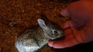 Catching Another Baby Bunny