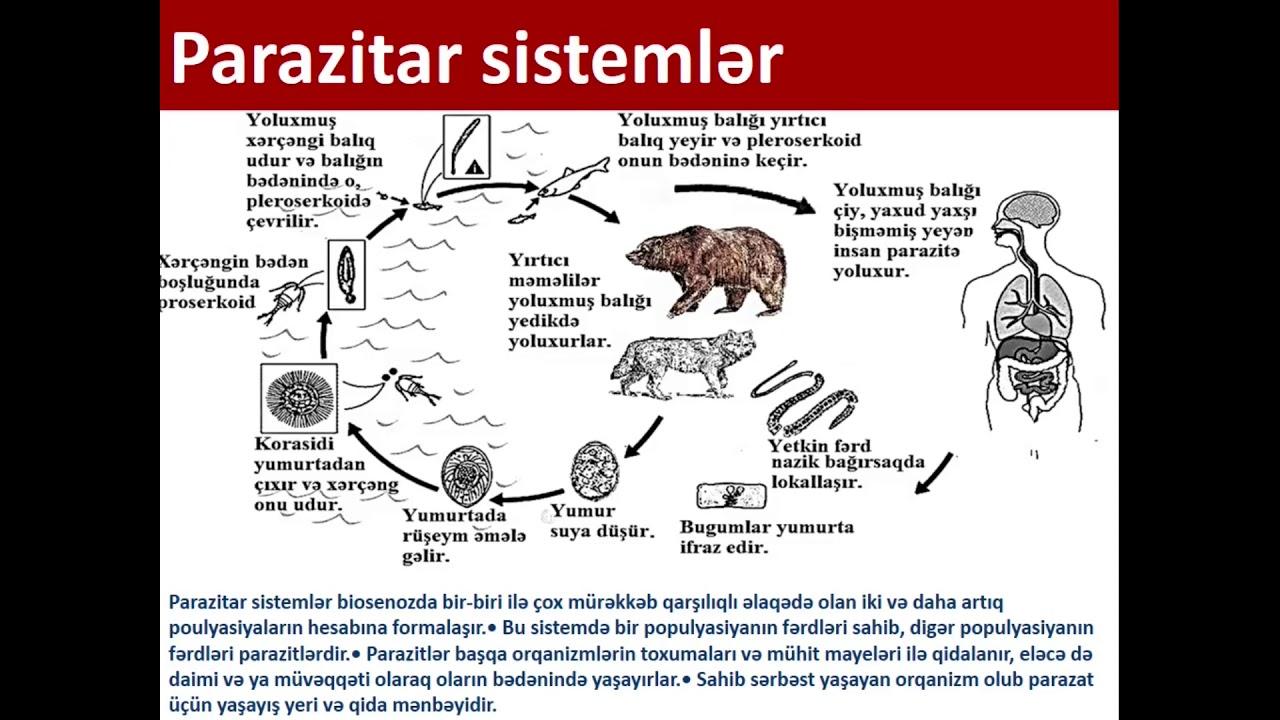 text parazitar tipuri de medicamente antihelmintice