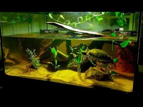Red Eared Slider Turtle Habitat - Huge Freshwater Aquarium!