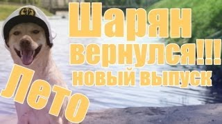 Шарик Шоу - Лето (Шарик снова с нами, выпуск 44)