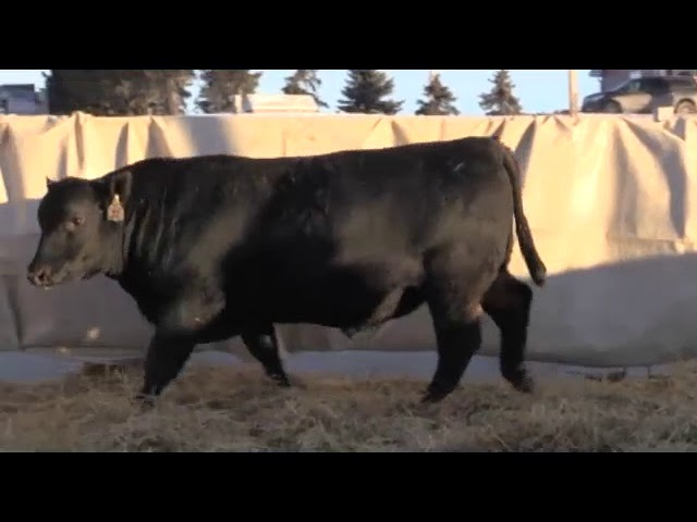 Marcy Cattle Company Lot 32