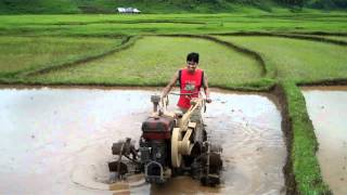 Planting rice in India