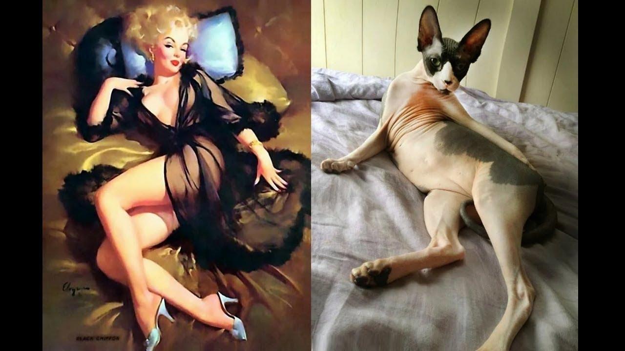 Кошки позируют как в стиле (пин-ап) - Смешные | стиль пинап девушки