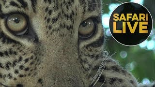 safariLIVE - Sunset Safari - July 20, 2018