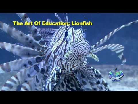 The Art Of Education: Lionfish - Part I, 'The Problem'