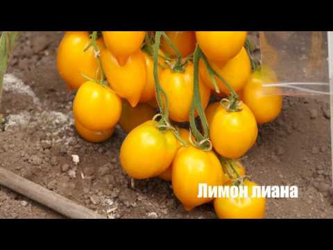 Агрофирма СеДеК. Огород круглый год. Выпуск 3.