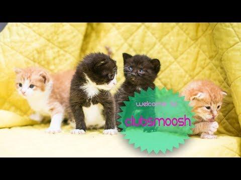 Club Smoosh Kitten Cam
