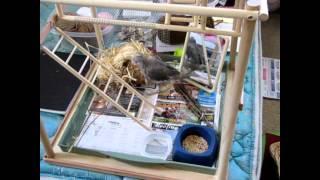 Playground For Bird