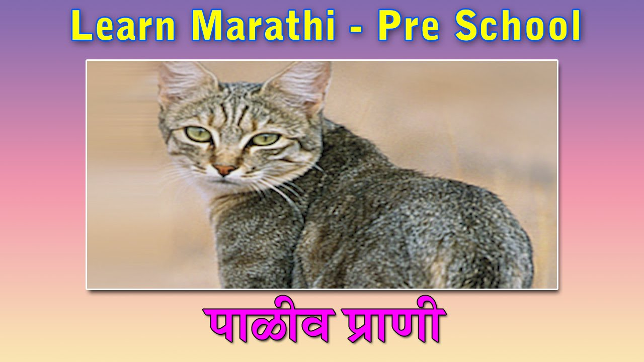 animals information in marathi