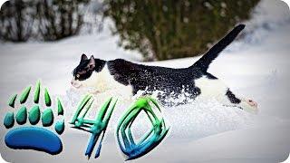Приколы с животными №40   Бегущий кот  Смешные животные  Animal videos