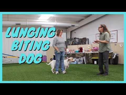 Lunging Dog, Biting Dog, Dog Training Hints