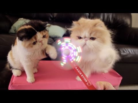 Thumbnail for Cat Video Cats vs Hello Kitty Light-Up Foam Fan