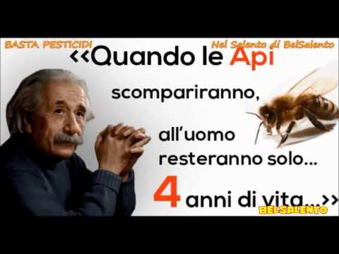 FRAUD OF XYLELLA IN THE SALENTO LAND - IN 5 MINUTES ONLY - servizi di BelSalento