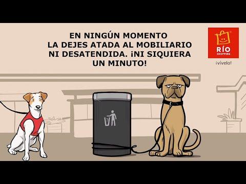 Cómo ir de compras con tu perro en RÍO Shopping | Pipper on tour