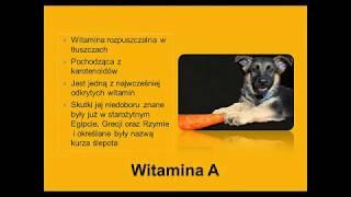 Witamina A u psów i kotów - rola w żywieniu