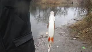 Новогодняя рыбалка в Запорожье