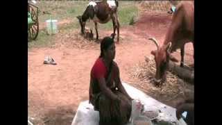 Low Cost Cattle Feed Kannada Baif Karnataka